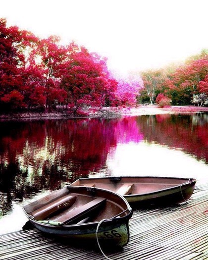 boats-bloom-trees-water