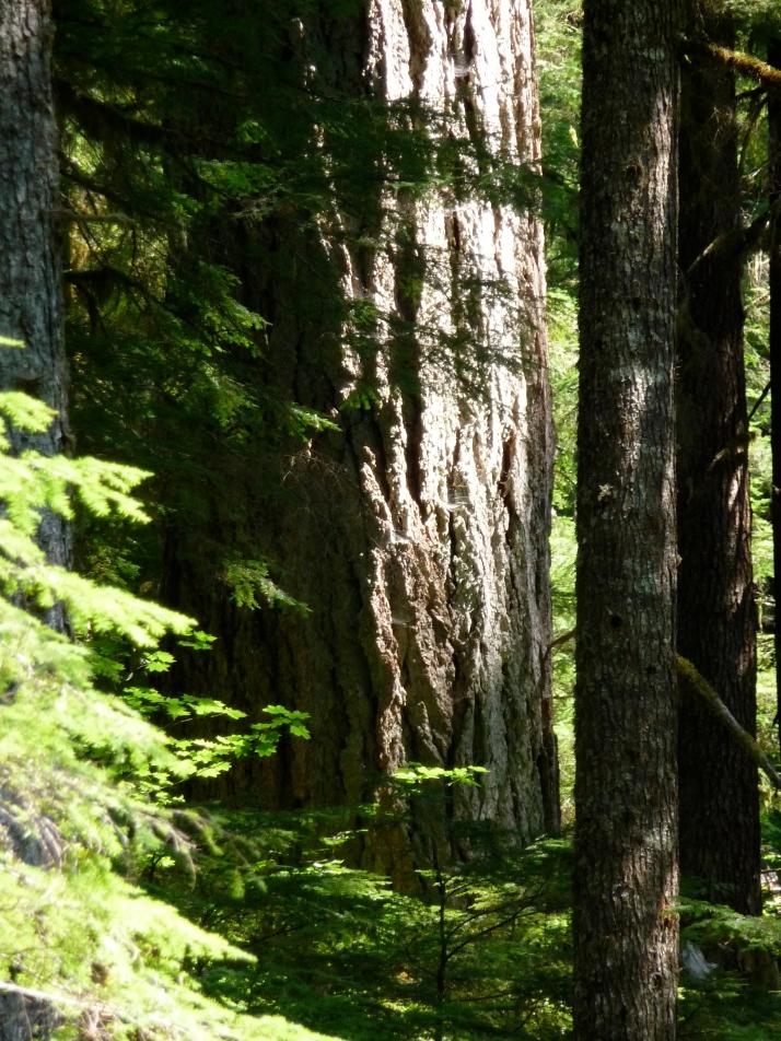 Gentle Giants- Mount Baker, Washington