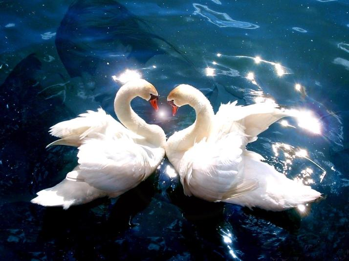 animals-pictures-falling-in-love