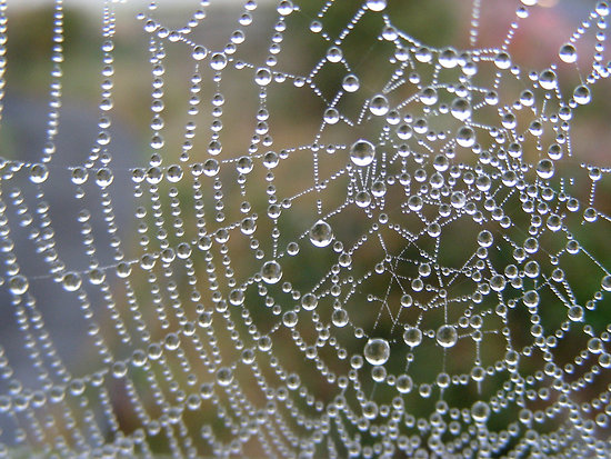 indras-web-spiders-web